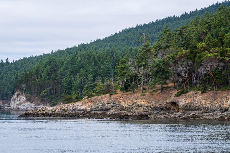 在岩石岸上的常青树和madrone树盖的山坡,风平浪静和阴暗天空,作为背景,圣胡安海岛 免版税库存图片