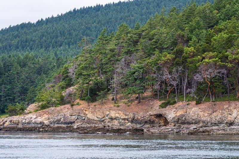 在岩石岸上的常青树和madrone树盖的山坡,风平浪静和阴暗天空,作为背景,圣胡安海岛 库存图片