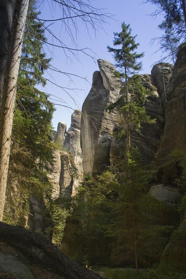 在岩石峭壁下的绿色树 图库摄影