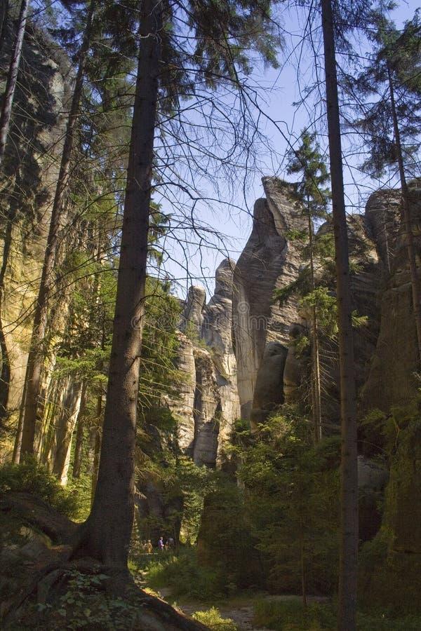 在岩石峭壁下的自然森林 免版税库存照片