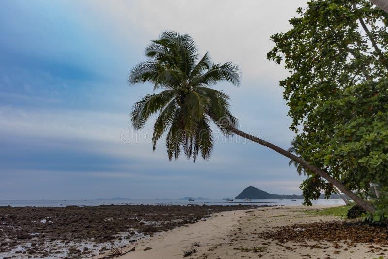 在岩石海滩附近的一棵棕榈树 免版税库存照片
