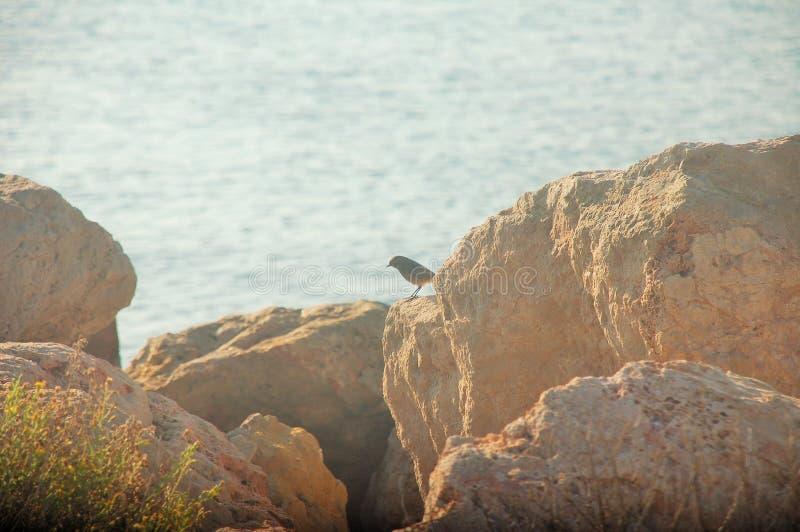 在岩石的一只孤独的鸟在海旁边 免版税库存图片