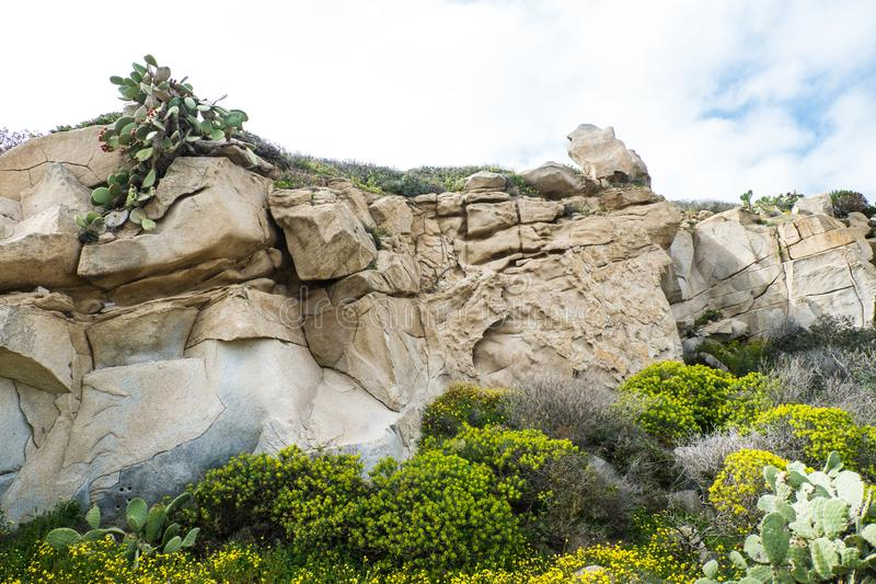 在岩石的仙人掌 免版税库存图片