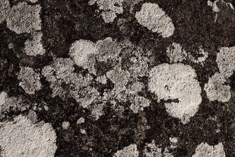 在岩石的地衣细节 免版税库存照片