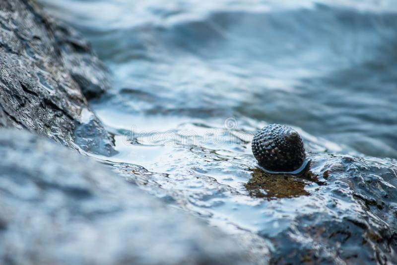 在岩石的壳在海 库存照片