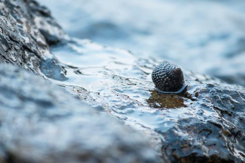 在岩石的壳在海 免版税库存图片