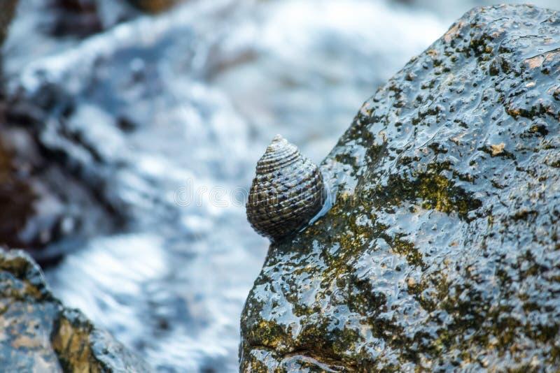 在岩石的壳在海 免版税图库摄影