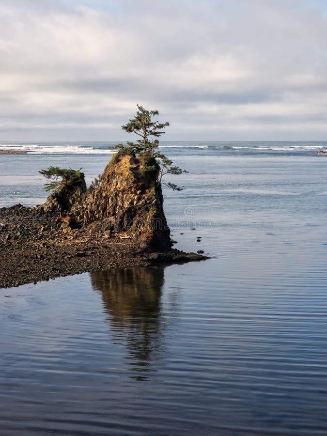 在岩石的孤立树在沿海海湾 免版税库存图片