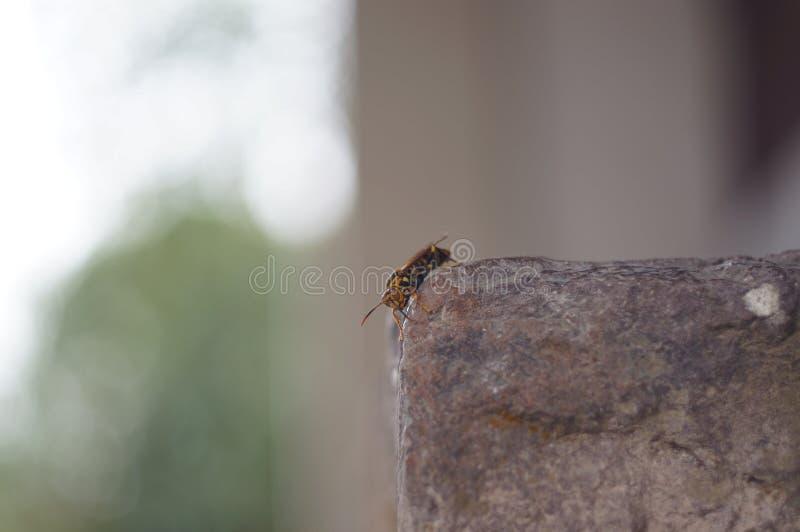 在岩石的昆虫 库存图片