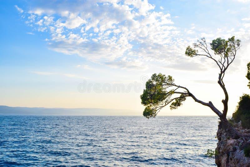 在岩石的松树 库存照片