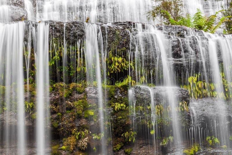 在岩石的流动的水和蕨落下特写镜头 塔斯马尼亚岛 库存照片