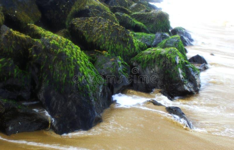 在岩石的海海藻 免版税库存照片