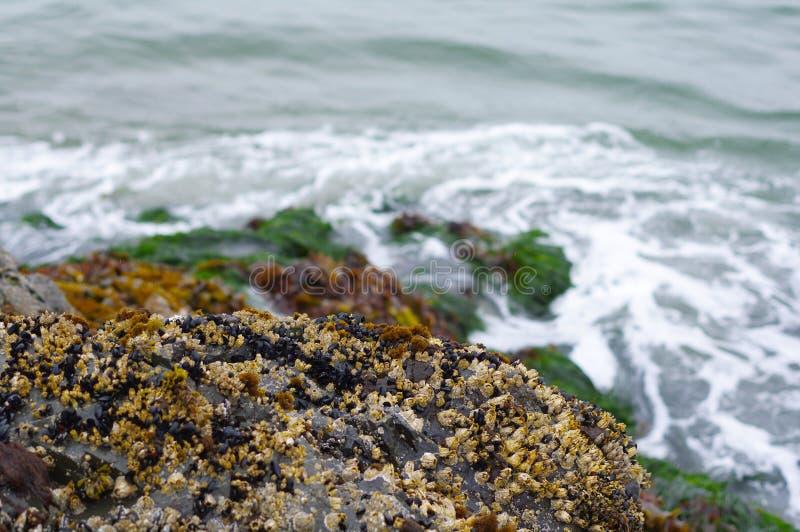 在岩石的海草临近水 免版税库存照片