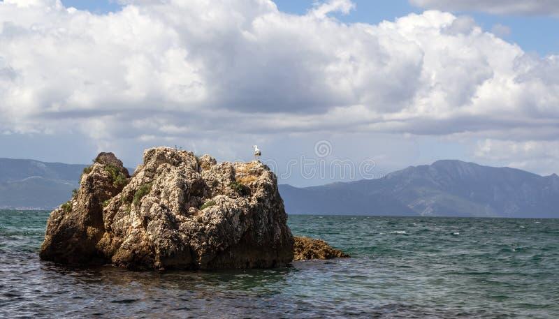 在岩石的海鸥在亚得里亚海 库存照片