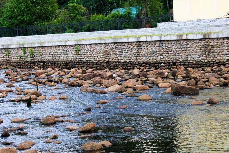 在岩石的海鸥在水附近 免版税库存图片