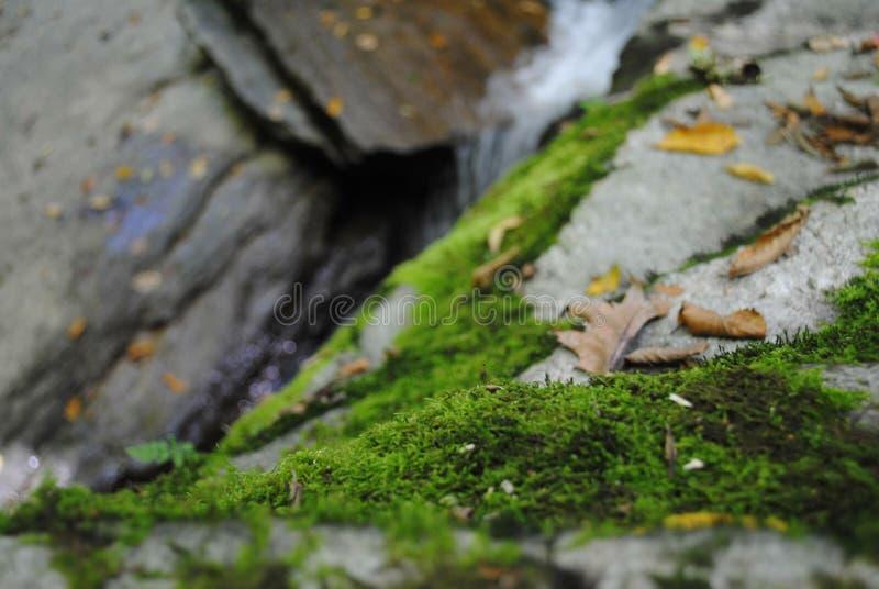 在岩石的海藻:瀑布远足 图库摄影