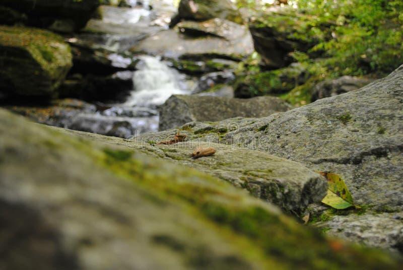 在岩石的海藻:瀑布远足 库存照片
