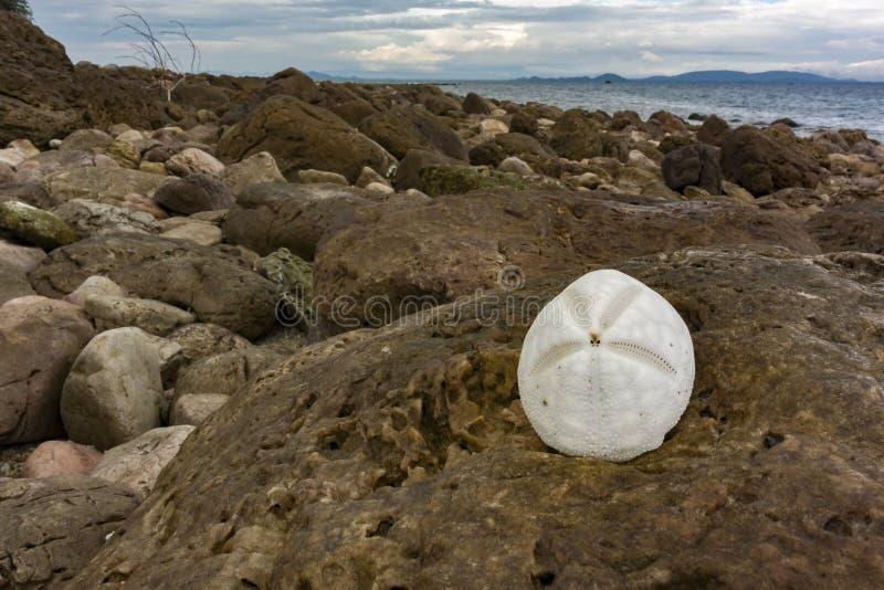 在岩石的白色贝壳 免版税图库摄影