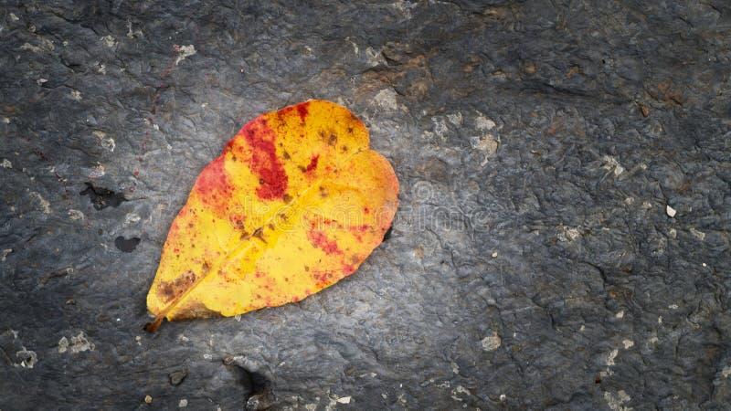 在岩石的纹理的叶子秋天 免版税图库摄影