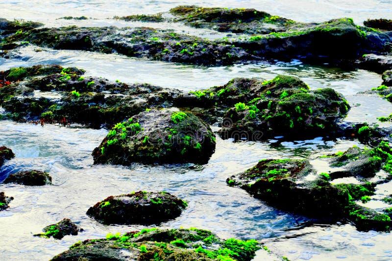 在岩石的绿色青苔从海滩 免版税库存照片