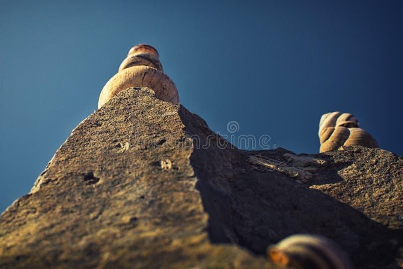 在岩石的蜗牛 库存照片