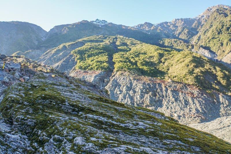 在岩石的青苔有在Fox冰川,新西兰的山脉背景 库存照片