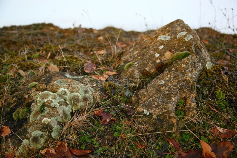 在岩石的青苔 库存图片