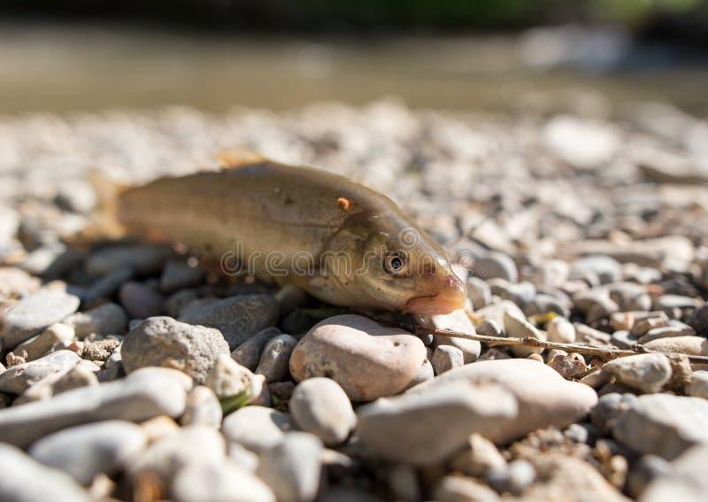 在岩石的鱼由河 免版税库存图片