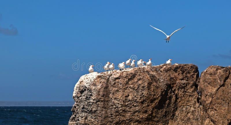 在岩石的鸟 图库摄影