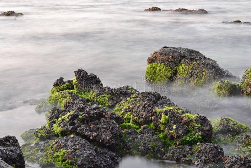 在岩石的Algea在毛里求斯的盐水湖 图库摄影