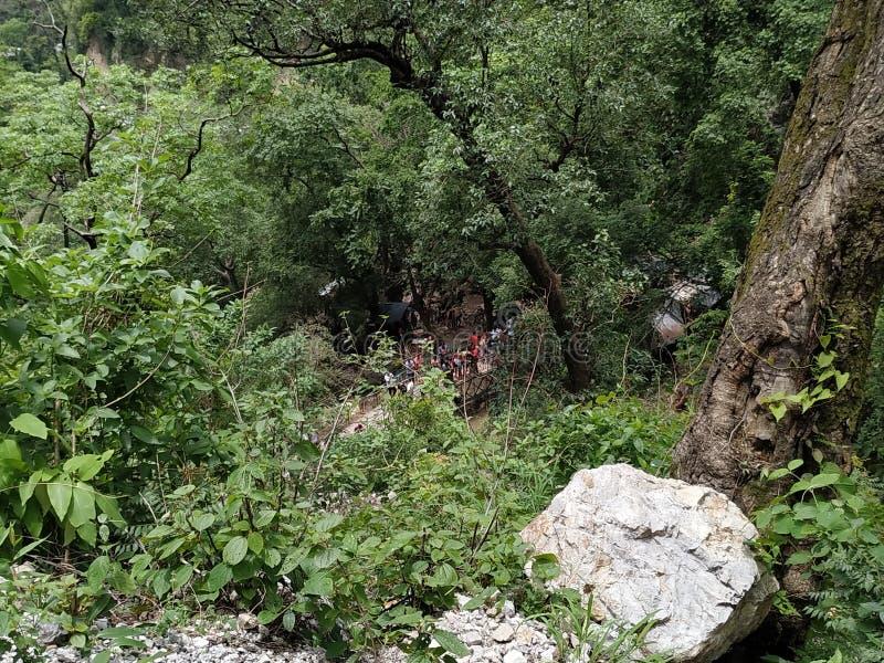 在岩石视图的绿色树owsome 免版税图库摄影
