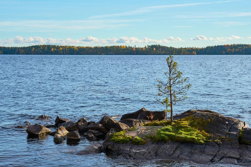 在岩质岛上的一棵孤独的杉木在一个湖中间在蓝色多云天空下 库存照片