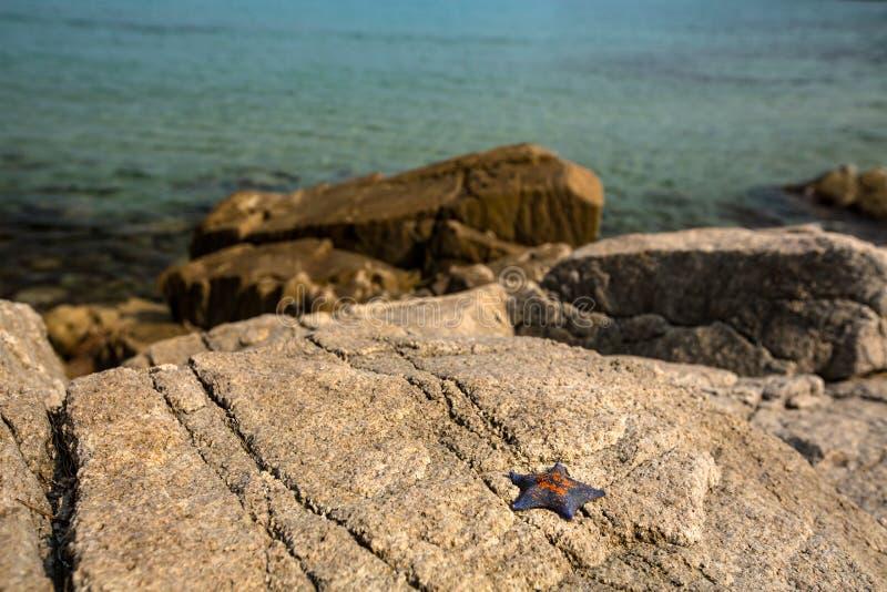 在岸的海星在晴朗的天气的岩石 库存图片