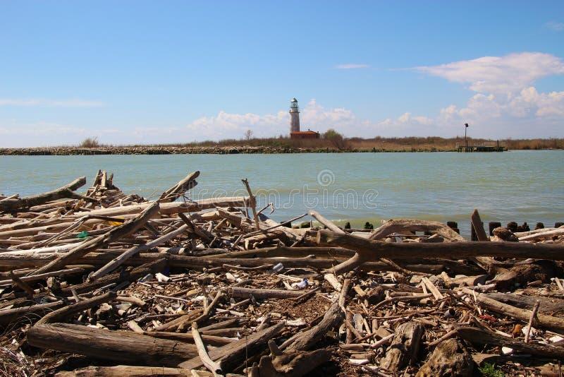 在岸的漂流木头 在这个区域Delta del Po,意大利 免版税图库摄影