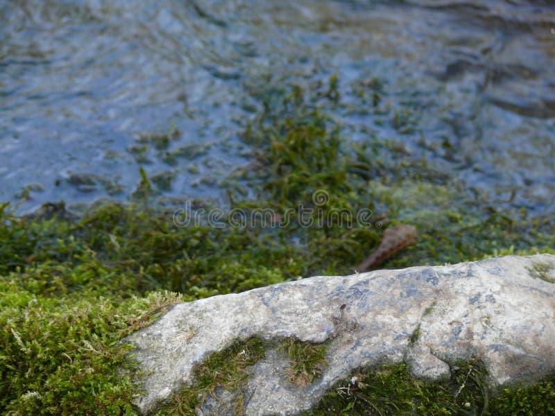 在岸的石头 库存图片