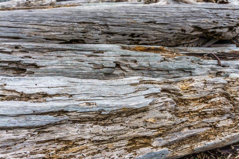 在岸4的漂流木头堆 免版税库存图片