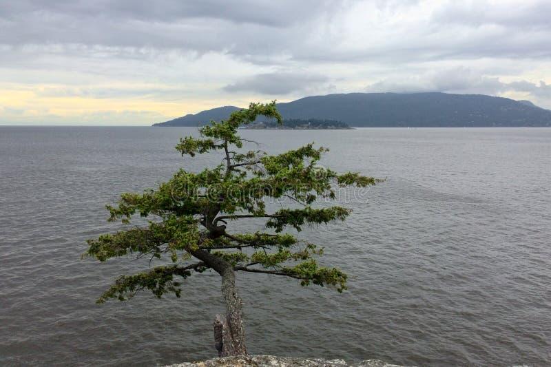 在峭壁的偏僻的松树在风雨如磐的天空的背景在海的 免版税库存图片