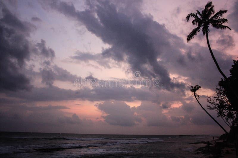 在峭壁的热带棕榈树 印度洋和海浪波浪 太阳、天空、海、波浪和沙子 库存照片