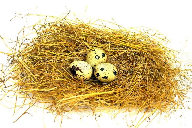 在巢的三个鹌鹑蛋在白色背景 免版税图库摄影