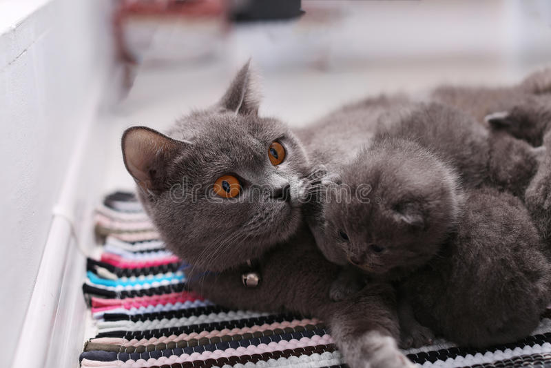 在巢的小猫 免版税库存照片