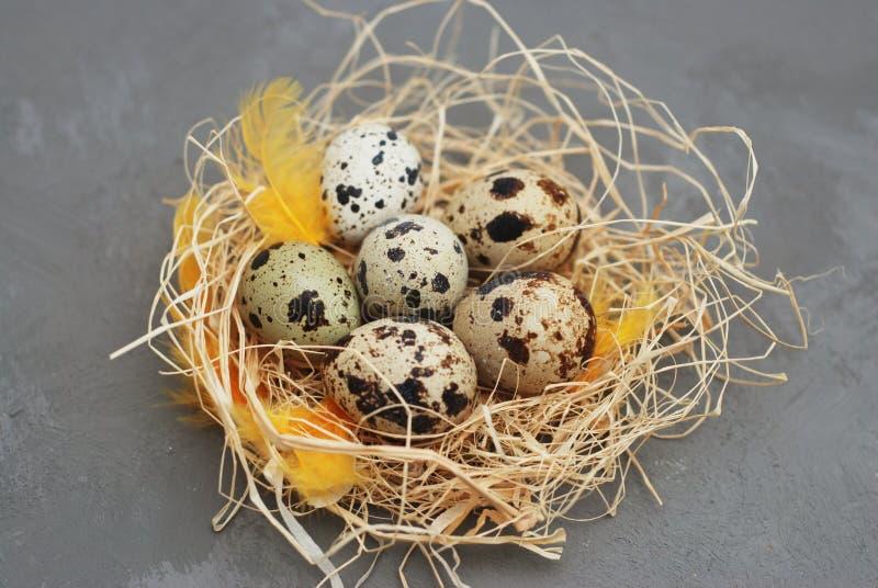 在巢的鸟鸡蛋在土气灰色背景 春天和复活节问候背景 免版税库存图片