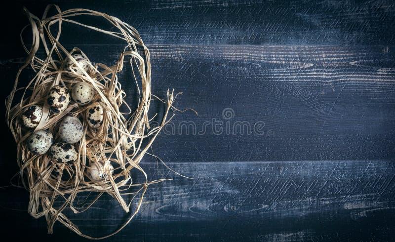 在巢的鹌鹑蛋 图库摄影