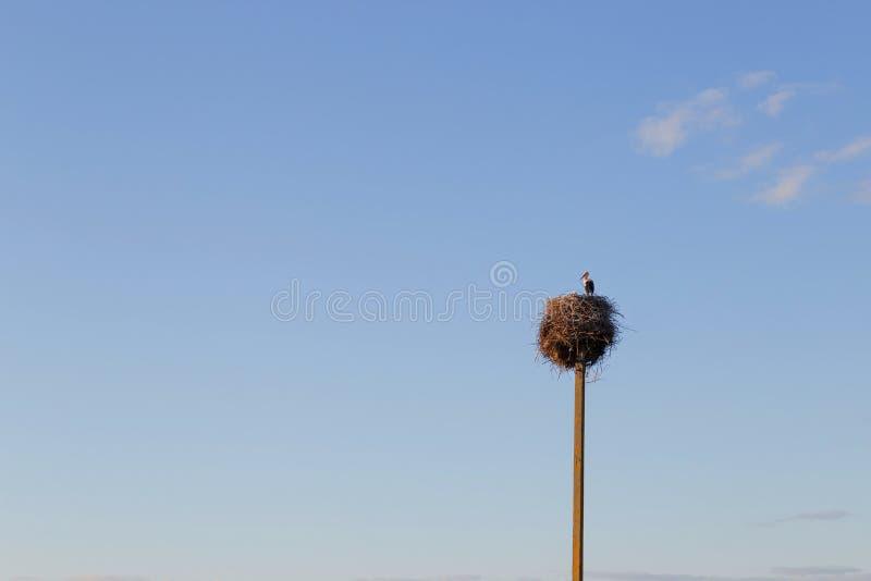 在巢的鹳与两只幼小鹳 免版税库存照片