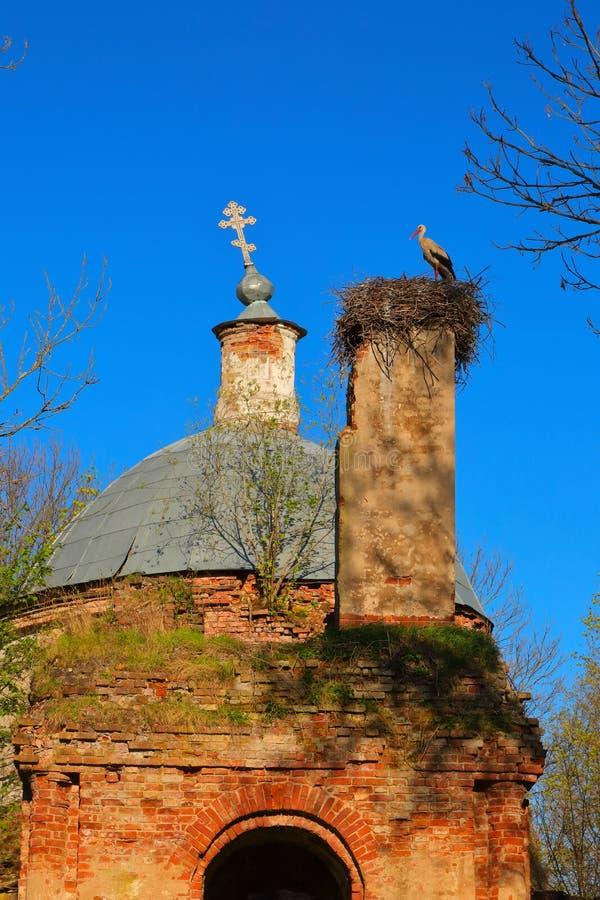 在巢的鹳在被毁坏的寺庙 免版税库存图片