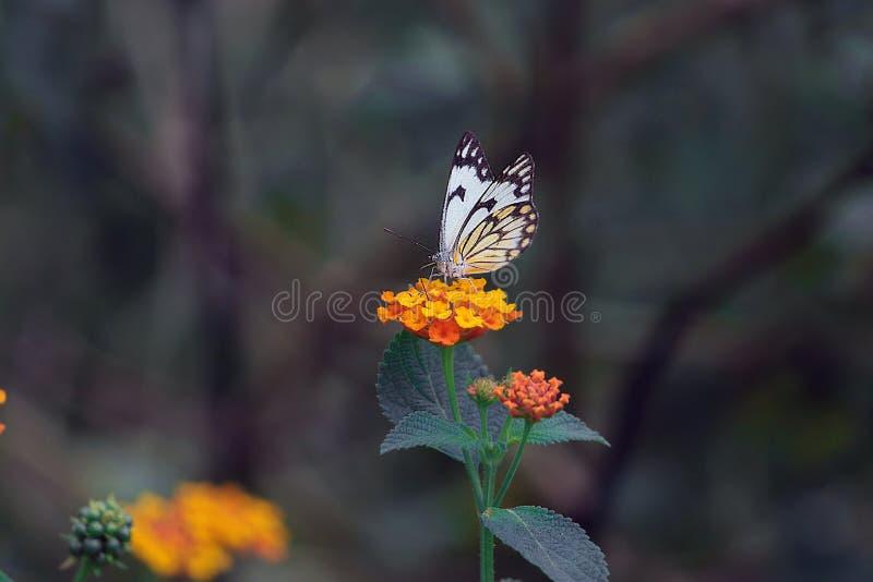 在工作的蝴蝶 免版税图库摄影