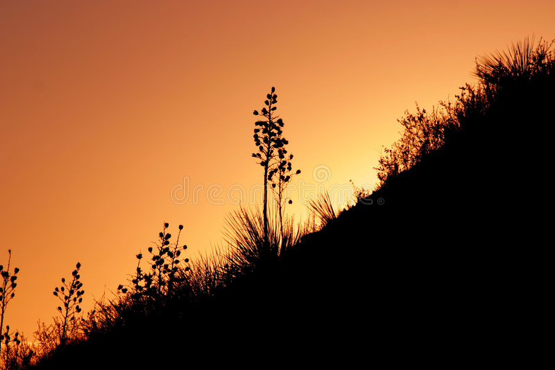 在工厂日落的沙漠 免版税库存照片