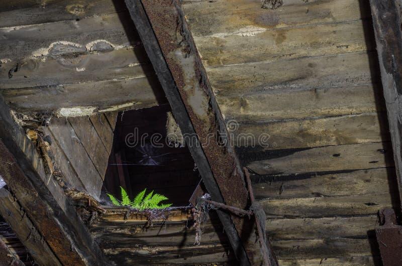 在工厂的顶楼的绿色蕨 免版税库存图片