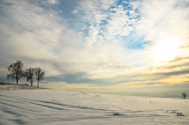 在左边的三个桦树在一个巨大的领域的背景在雪的 免版税库存图片