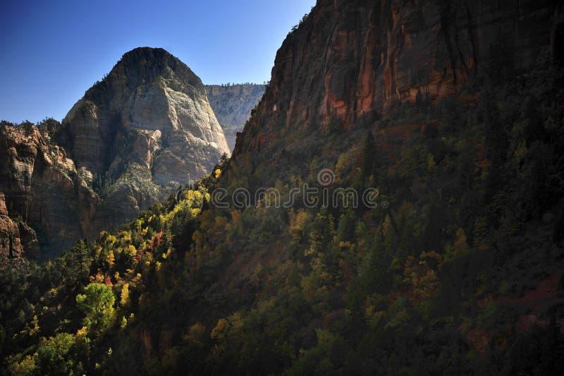 在巨型的山的秋叶在锡安国家公园 库存照片