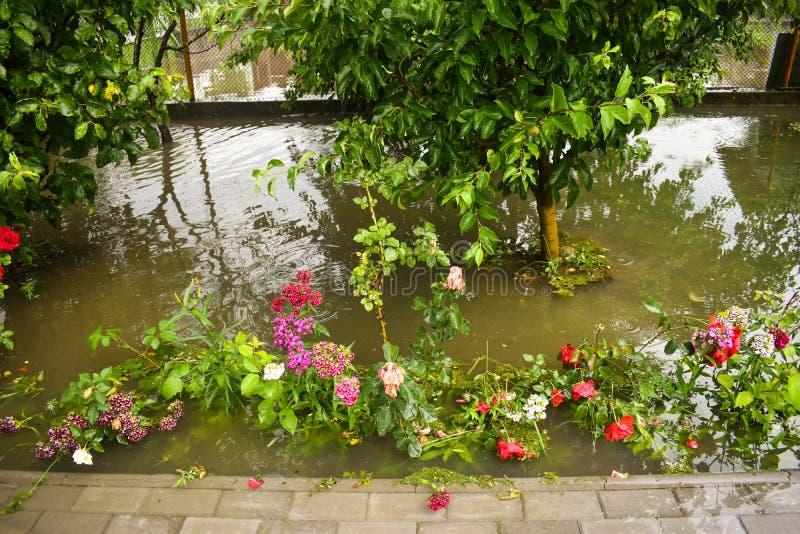 在巨型的风暴雨以后的大水洪水 庭院和植物用肮脏的水盖 在重以后的许多损伤 图库摄影